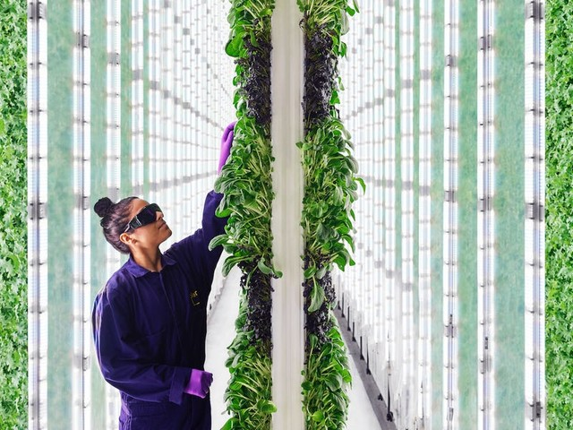 A futuristic farming startup raised $260 million from Jeff Bezos and SoftBank on the promise of upending agriculture. Insiders are raising questions.