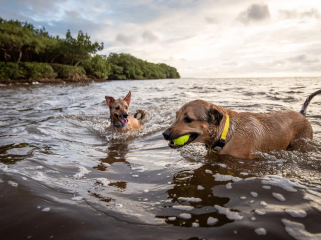 GPS dog trackers that help you keep tabs on your pet around the clock
