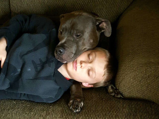 Pit Bull Warns His Sleeping Family About House Fire Just In Time
