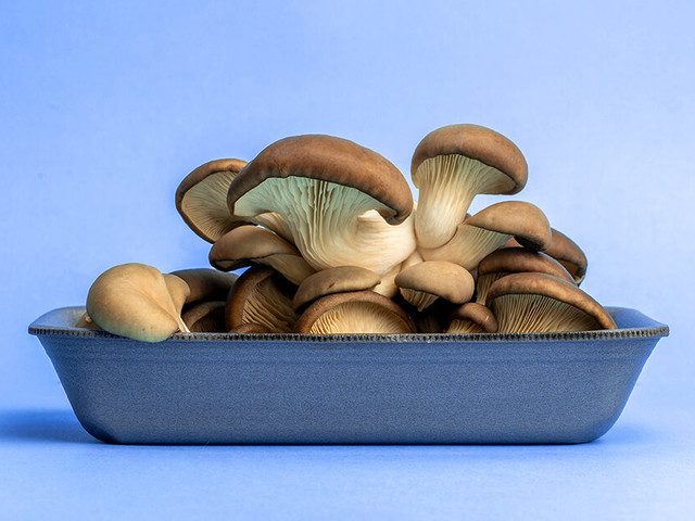 Work the Shroom: 5 Body Benefits of the Oyster Mushroom