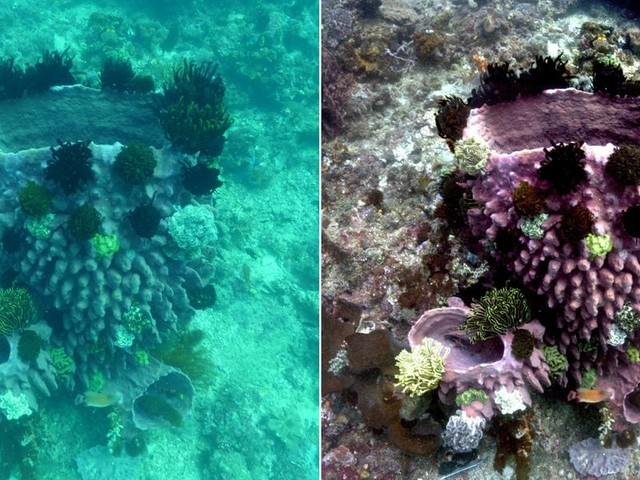 Oceanographers created an algorithm that transforms underwater photos and reveals their amazing true colors