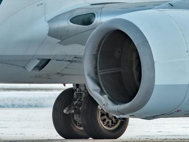 Alaska Airlines flight hits bear on runway during landing