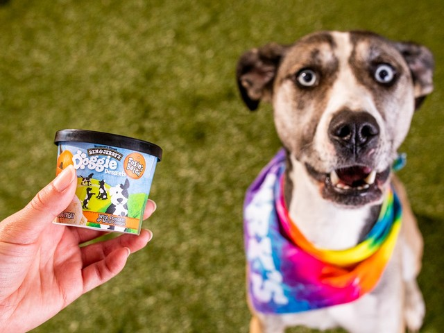 Ice cream for dogs? Even pets are eating their pandemic feelings.