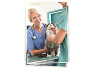 New Countrywide Dating Service Understands What Makes Singles Want to Date a Veterinarian