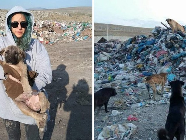 800 Dogs Are Living Without Food Or Shelter In This Landfill — And People Are Trying To Save Them