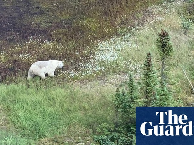 Canada murder hunt: search for teen suspects leads only to polar bear