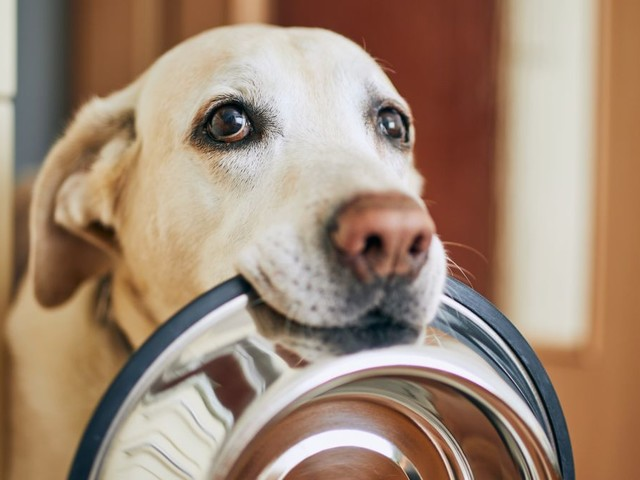 These Brands of Dog Food Have Been Recalled