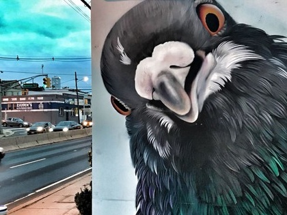 Phenomenal murals highlight extraordinary lives of humble pigeons