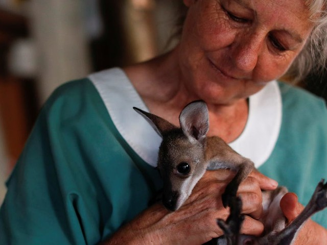 Australian wildfires claimed the mothers and habitats of these baby kangaroos. New photos show their lives with animal carers.