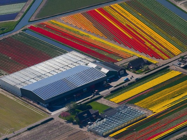 Sales of flowers, pork push Dutch farm exports to new record