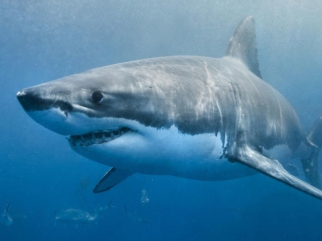 Before Shark Week and 'Jaws,' World War II Spawned America's Shark Obsession