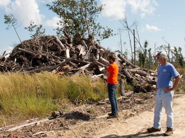 Timber farmers face tough choices year after Michael