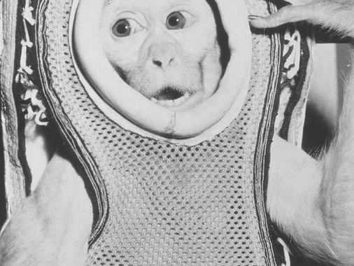 That time a monkey flew to the edge of space and then smashed into a destroyer