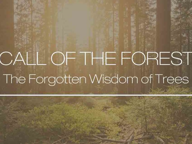Call Of The Forest — The Forgotten Wisdom of Trees