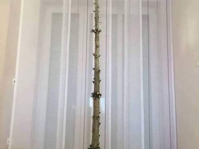 Christmas Tree If You Have a Cat