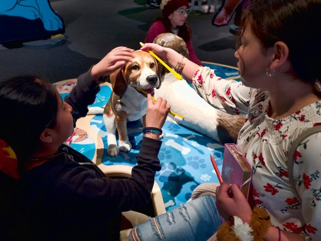 Science Exhibit Explains the Dog-Human Friendship