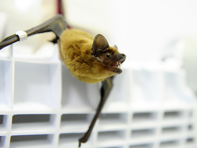 Proof of Bats at Wuhan Lab