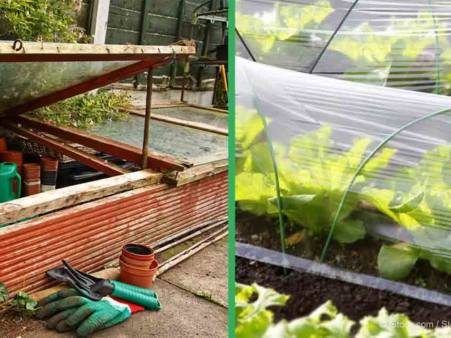 Garden Know-How: Extend Your Growing Season