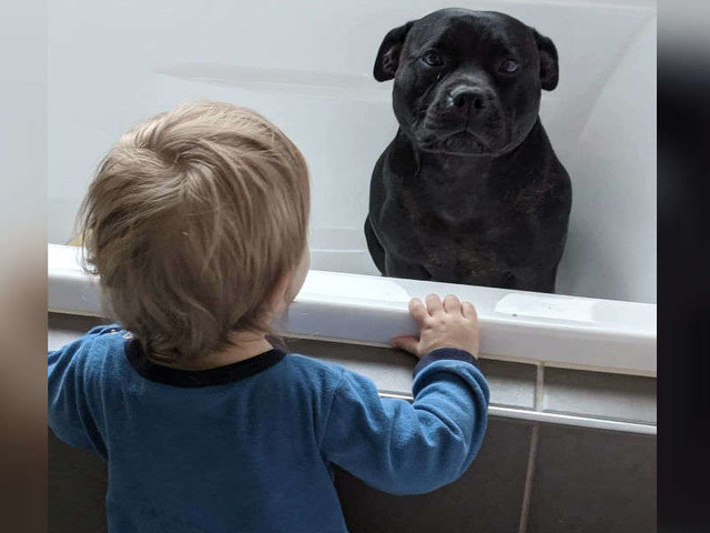 Dog Sneaks Into The House Next Door To Join Kids' Bath Every Night