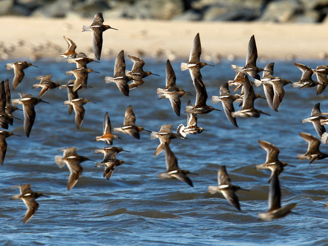 Birds are disappearing from North America