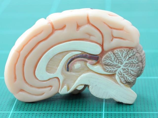 New method helps better understand pathological development of ALS