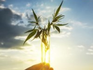 Why Marijuana Investors Don't Want Dividend Payouts… Yet