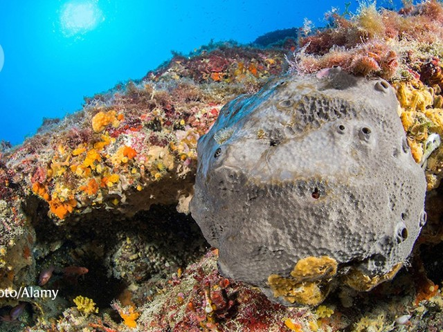 This sponge-like fossil could be from Earth's earliest known animal