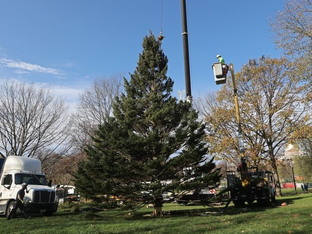 Why Halifax Sends A Christmas Tree to Boston Every Year