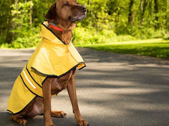 Dog raincoats and vacuum bags by request, retinol serum and shampoo bars