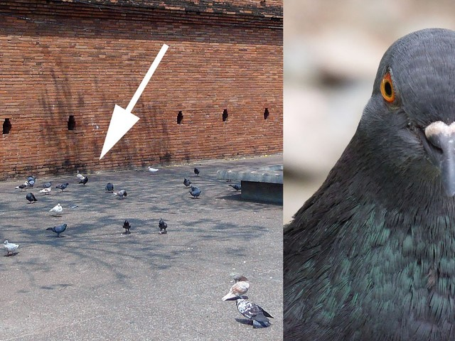 Professional 'Pigeon Spookers' Help Tourists Nail Instagram Photos