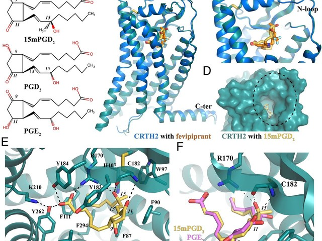 Molecular basis for lipid recognition by the prostaglandin D2 receptor CRTH2 [Biophysics and Computational Biology]