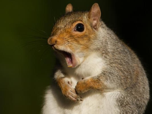 Squirrel blamed for New Jersey power outage
