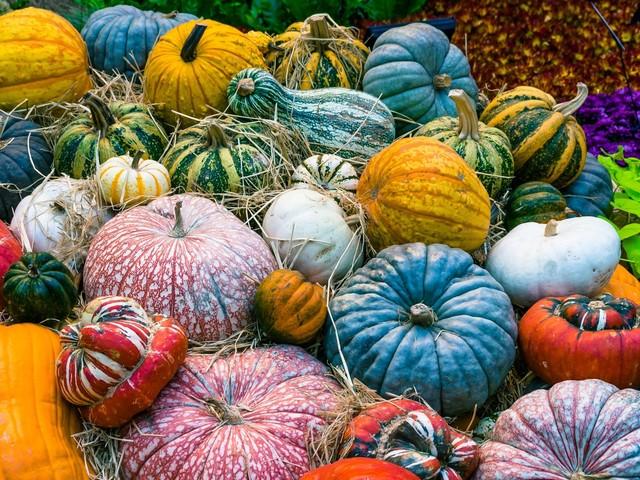 Market Report: Pumpkins
