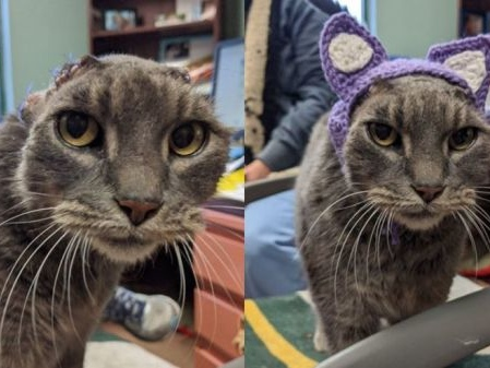 Cat Gets New Ears