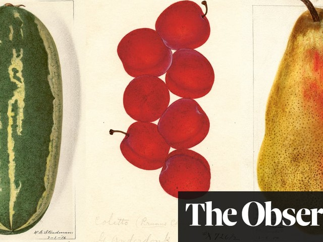 Get fruity: vintage botanical watercolours – in pictures