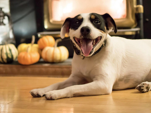 Become a foster pet parent for the holidays