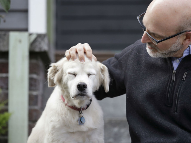 Scientists looking for 10,000 dogs to study aging