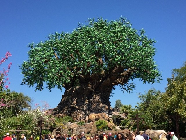 Epcot and Animal Kingdom Extend Operating Hours on Select Days