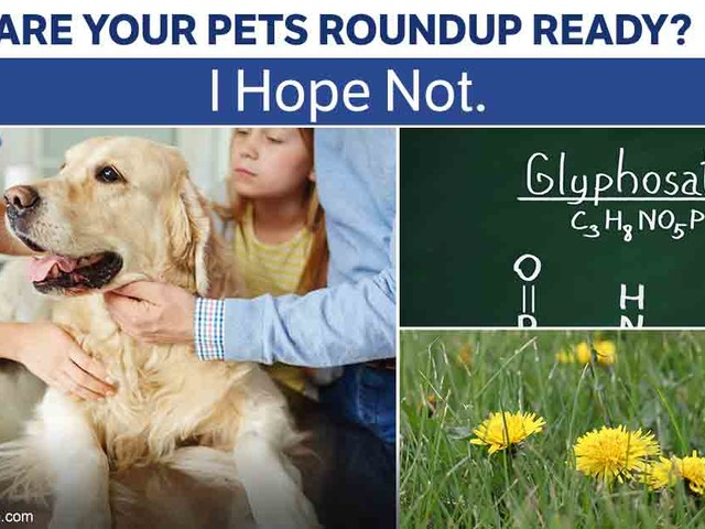 It's Toxic to Most Life - Including Your Precious Pets