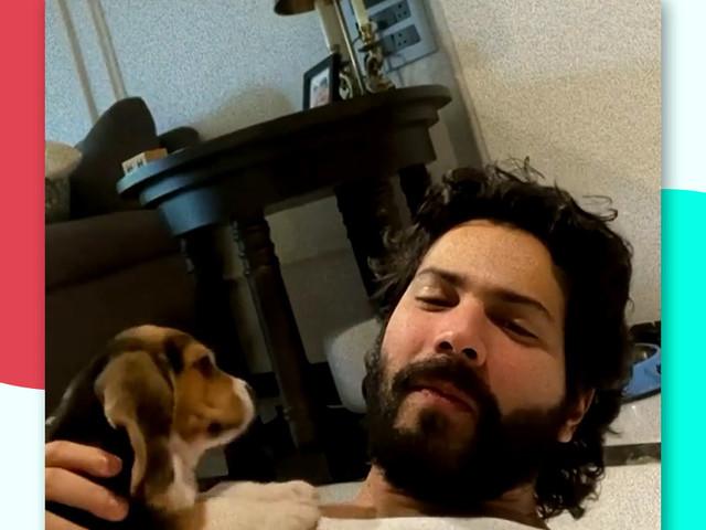 Varun Dhawan Welcomes 'Fatherhood'; Here is How Pets Boost Mental Health