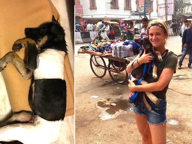 Tourist Hears Crying And Ends Up Saving A Stray Puppy's Life