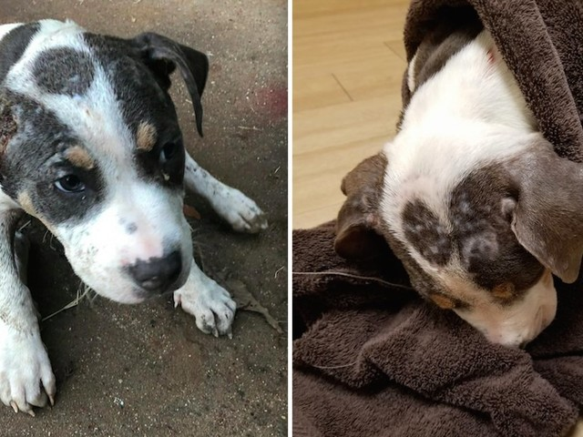 Puppy Found On Side Of Road Can't Even Believe He Just Got Saved