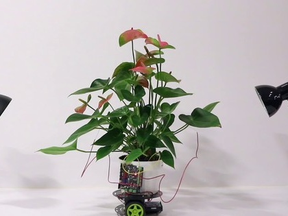 Houseplant gets wheels, can move around on it own