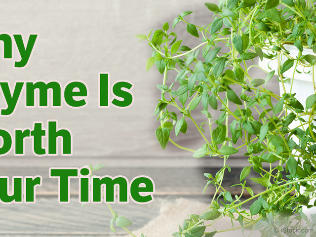 It's Worth Your Time to Grow Thyme