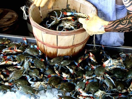 Seafood company charged for mislabeling blue crab meat