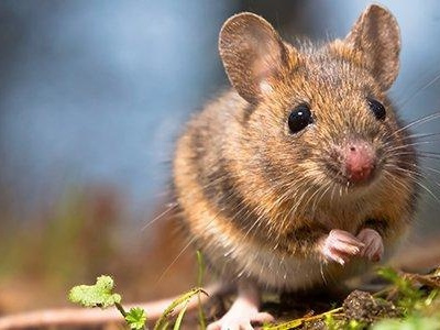Why You Should Call The Professionals About Rodent Problems In Your Virginia Home