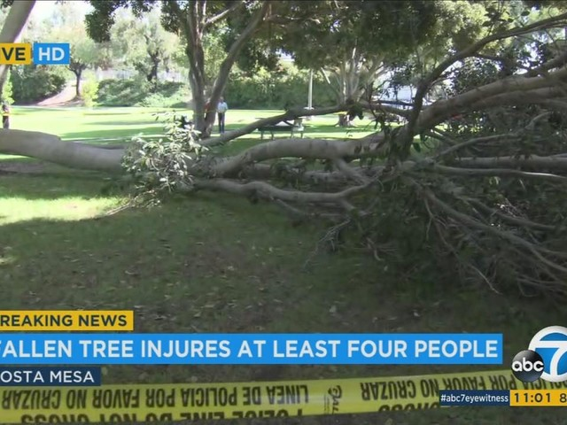 Large part of Costa Mesa tree falls on 4 seniors; victims not seriously hurt