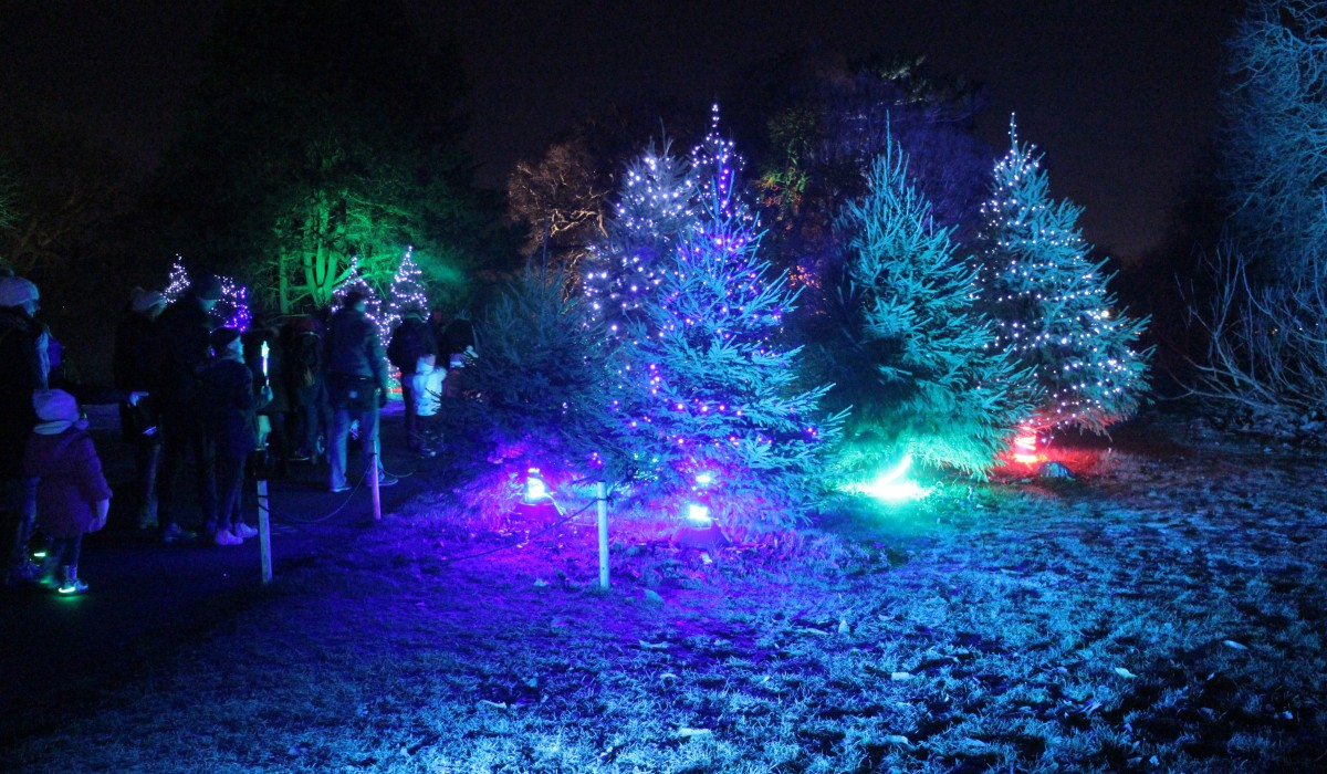 Kew Gardens Christmas Lighting   ArthurGuy.co.uk