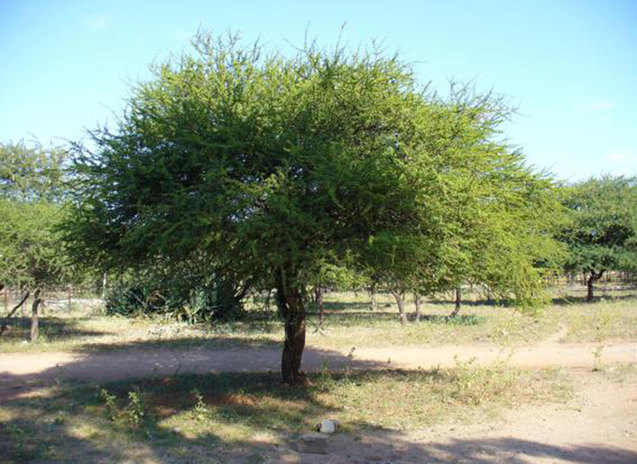 Sabores marabu 15 kg el marabu a kubai grillezes lelke marabu 05