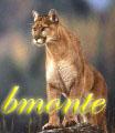 bmonte